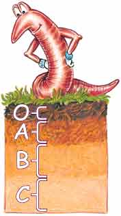 SK stands on a Soil Horizon and shows layers: O, A, B, C