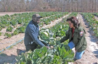 NRCS field staff works with landowner on cabbage patch
