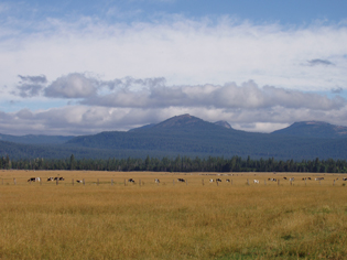 The J.A. Cox Ranch is located in the Klamath Basin, an area plagued by water shortages that have threatened agriculture, fish and wildlife.