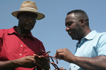 Abraham Carpenter Jr. (right) and Dr. Henry English, University of Arkansas Pine Bluff, look over this year's crop.