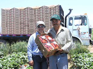 Jesus Castillo and his wife enjoy improved strawberry yields after working with NRCS and the Cachuma RCD.