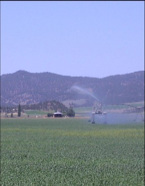 Photo of Agriculture in the Klamath Basin