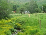 Stream fencing protects against animal waste and streambank plantings.