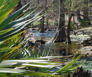 Honey Creek is a spring fed creek which flows through Honey Creek State Natural Area in Comal County.