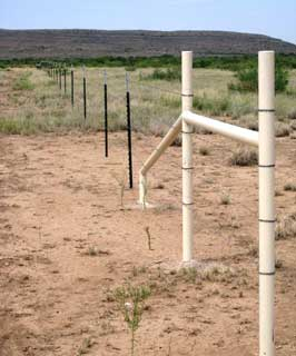This stretch of pronghorn friendly fence is one of many that will be installed with the help of the Natural Resources Conservation Service in the Trans-Pecos region of Texas.