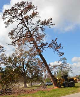 Within a matter of minutes, mature pines surrounding a playground at Houston's Memorial Park were cut at the base, pushed down, cut into manageable logs, and loaded on trucks to be hauled away.