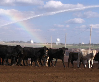 Dust sprinkler systems are one of the methods being utilized in Texas to help reduce particulate emissions (dust) both on and off-site of Confined Animal Feeding