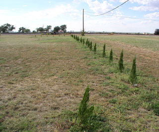 Windbreak trees were planted to enhance the aesthetics of the site and provide protection from wind erosion in the future.