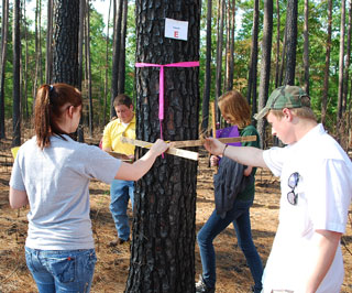 Woodland sticks are used to determine tree height.