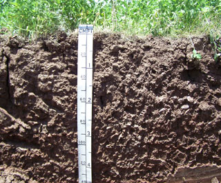 The Ships series is classified as a Vertisol. Several soil features known as slickensides can be seen along the left-hand portion of the photo from a depth of about two to four feet.