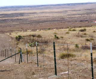 Trans-Pecos rancher Bill Hubbard recently watched as a herd of pronghorn antelope utilized the pronghorn friendly fence to gain access to a pasture he has never seen them in before.