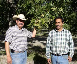 U.S. Department of Agriculture (USDA) Natural Resources and Conservation Service (NRCS) District Conservationist J.M. Villarreal (left) and Arrowhead Farms owner Akram Mohammad show off the Grade 1 pecans that were grown this year using micro irrigation drip watering system on his farm in Crystal City, Texas.