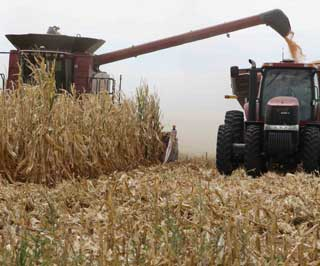 David Ford harvested corn in late September and his overall yields were below average in drought conditions.
