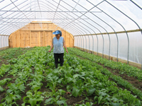 A grower tending crops in a high tunnel.