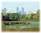 Geese in marsh with city skyline in background