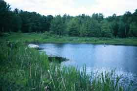 Wildlife pond buffer