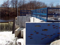 iew of fish ladder at Riverside Park (Atlantic Mills Dam)