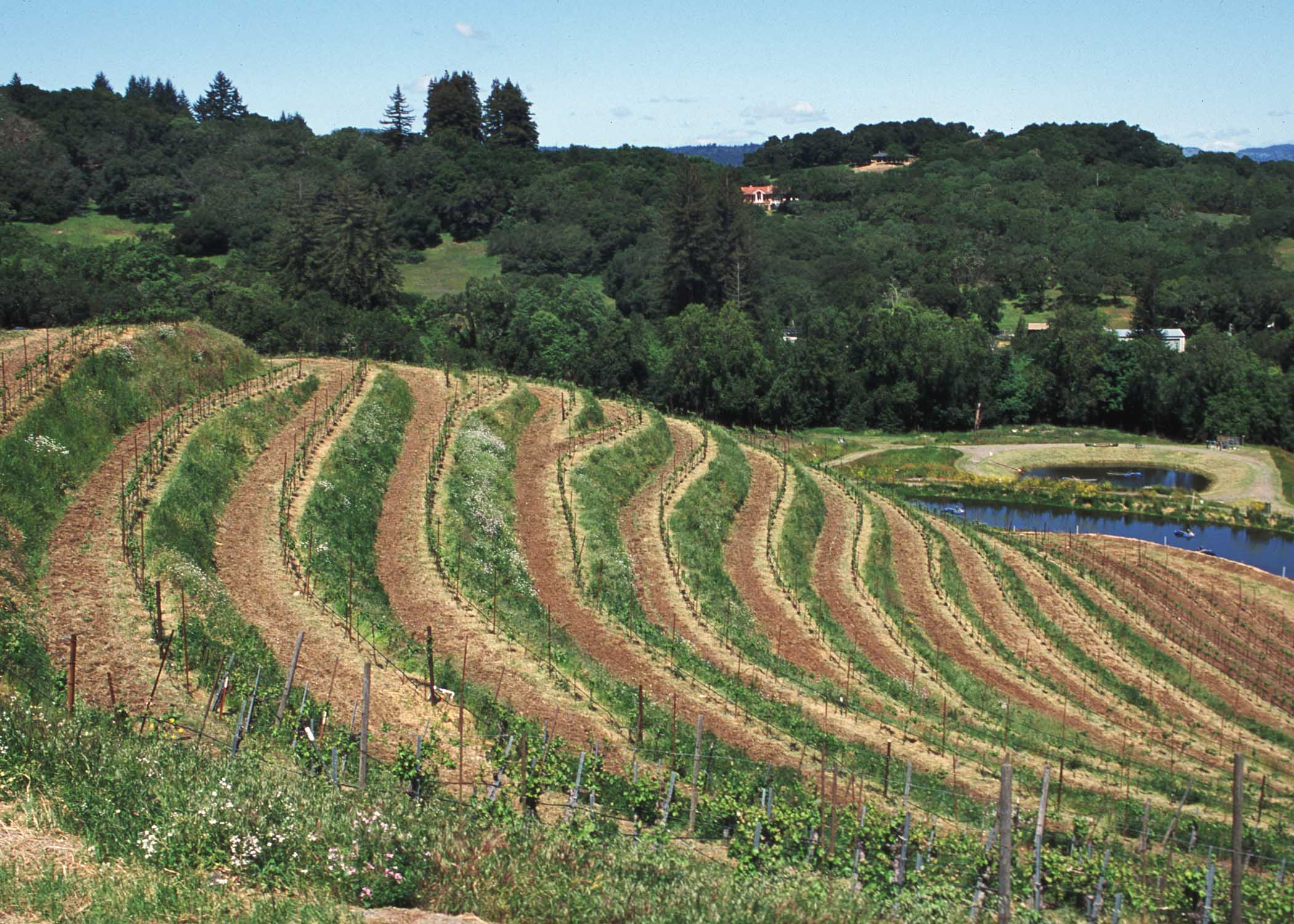 What is contour farming and how does this help control for Define terrace farming