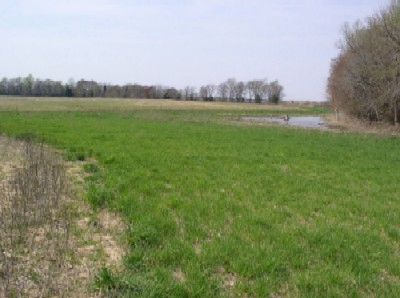 Picture of Cropland field in Upper Nanticoke River Watershed