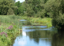 Web image: Photo of a stream with lush vegetation along its bank