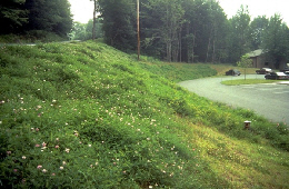 Web image: Photo of a critical area seeding protecting a steep roadbank