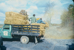 Web image: Photo of mulch being applied by a mechanical method over a large area