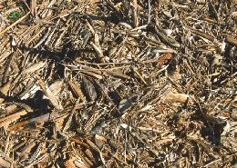 Web image: A close-up view of crop residue that is providing protection of the soil from rain and wind erosion. Click photo for full page view