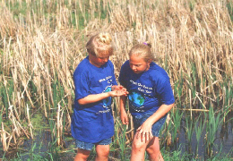 Photo of Earth Team participants examining a butterfly beside a wetland. Click photo for full page view