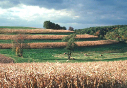 Web image: Photo of a crop field with stripcropping applied. Click photo for full page view