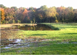 A wetland constructed in a wet, unproductive pasture