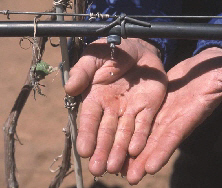 A microirrigation system conserves water by applying it directly to the root zone of the plant