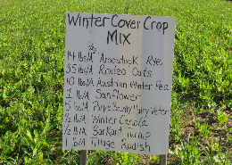 Web image: A cover crop demonstration plot. Click photo for full screen view