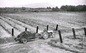 Web image: Photo of run-down vineyard soils being rebuilt under conservation treatment including application of wood chips to stop erosion and restore organic matter. A manure spreader readily handles the chips. Click photo for full page view.