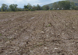 Web link image: A before photo of a field adjacent to the Chenango River, after the harvest of corn  for silage. Click image for full screen view