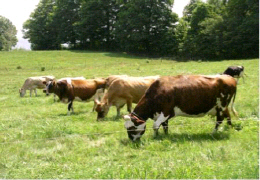 Livestock grazing on land devoted to a prescribed grazing system.