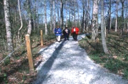 A recreation trail passing through a woodland