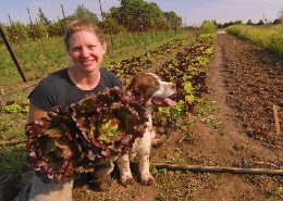 Web image: Photo of a farmer holding a crop of freshly harvested  organic lettuce