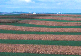 A view of a field with stripcropping applied. A conservation cropping rotation helps to properly manage a stripcropping system