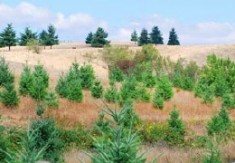 Young trees established on a hillside