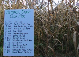 Web image: A cover crop demonstration plot. Click image for full screen view