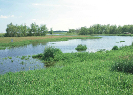 Web image: Photo of a wetland. Click photo for full page view