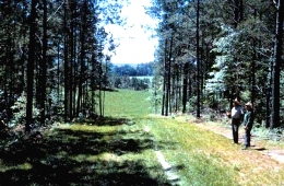 A photo of a managed forest with a trail