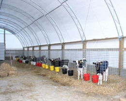 A view of the interior of a shelter for raising calves