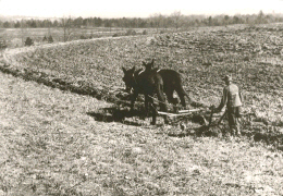 Photo from the Dust Bowl era. A horse drawn plow being used along the contour of the land. Click photo for full page view