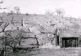Web image: Photo of a severely eroded hillside taken in the 1920's. Click photo for full page view