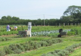 A view of the Food Pantry Farm fields