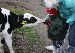 Web image: A Bugbee teacher and student with holstein calf