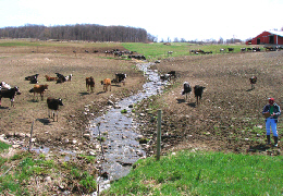 Web image: Photo of an area used by livestock which presents a number of environmental concerns, including sedimentation and contamination of waters by animal wastes. Click photo for full page view