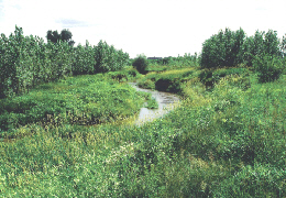 Web image: Photo of riparian herbaceous cover. The plant species selected for this site are tolerant of intermittent flooding and saturated soils. Click photo for full page view