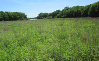 warm season grasses planted in Wabash River corridor